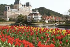 8.花の都、オランダで働きたい!