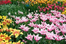 9.オランダの花事業