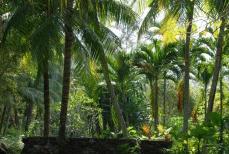 10.ジャングル、ジャングル、マレーシア